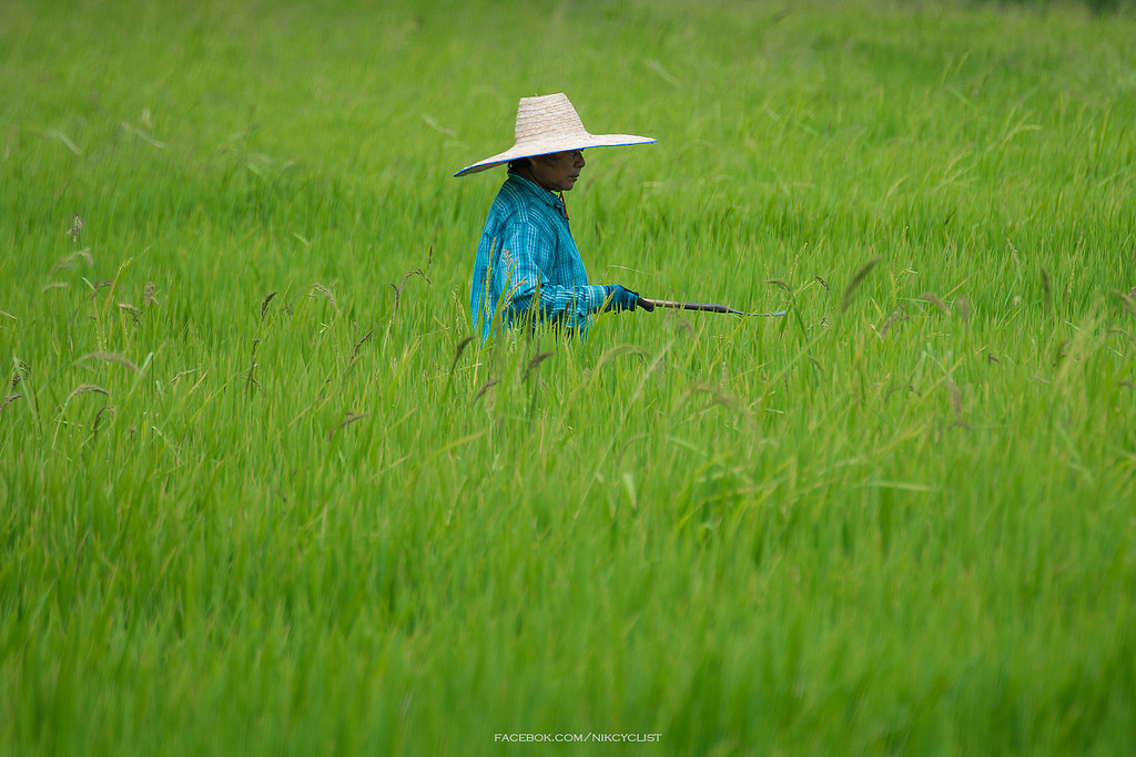 Labour Day, or May Day, celebrates farmers and other workers in Thailand - photo by Prachanart Viriyaraks