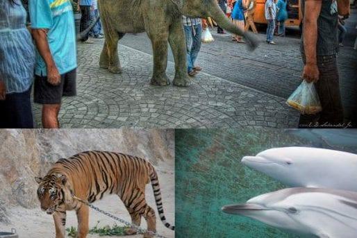 Please avoid animal attractions
